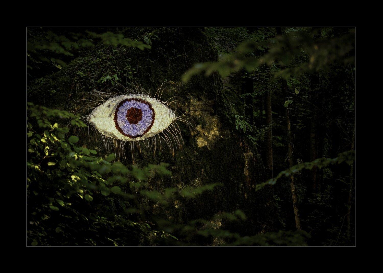 Parkwald7-Das Auge