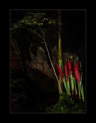 Parkwald1 - Rote Wache