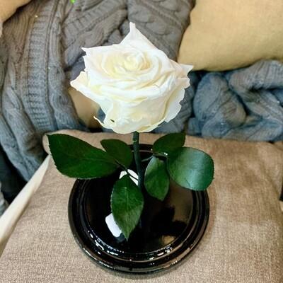 Роза в колбе белая Эквадор