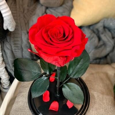 Роза в колбе Премиум красная