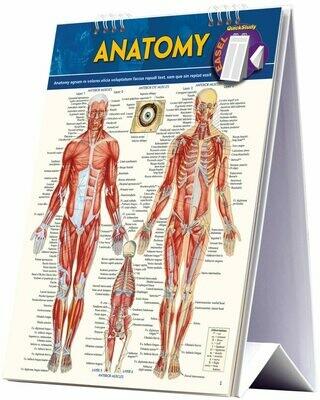 Quick Study Easel Anatomy