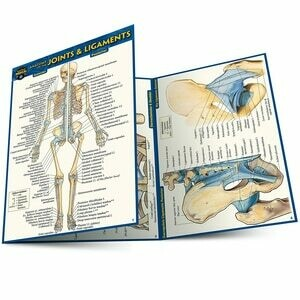 Quick Study Medical Anatomy of the Joints & Ligaments