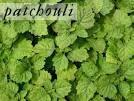 Patchouli & Dragon's Blood White Sage