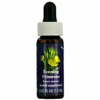 Evening Primrose 24510