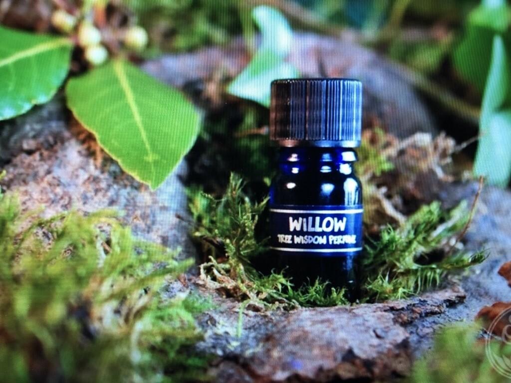 Willow Tree Perfume