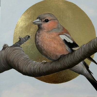 Songbirds of Istanbul - Chaffinch