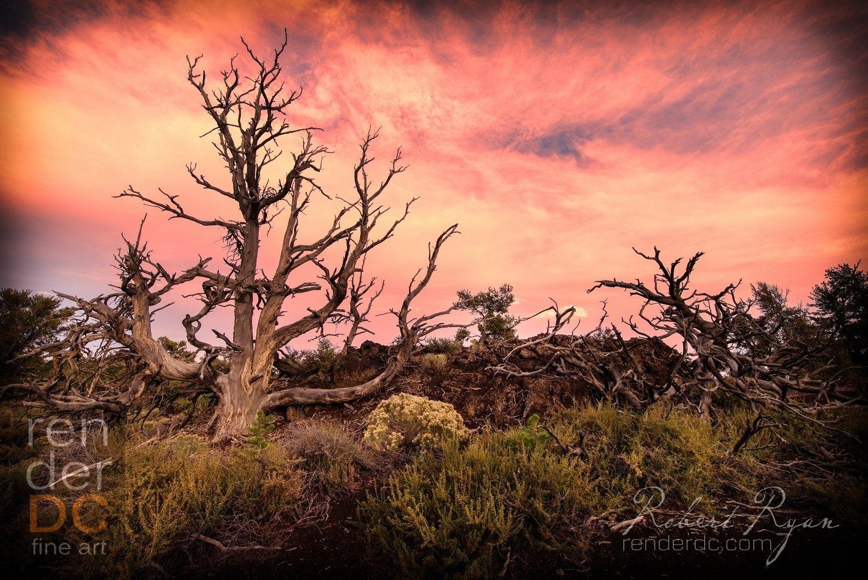 Deadwood 12x16
