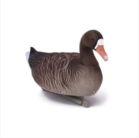 Чучела белолобого гуся (плавающий)