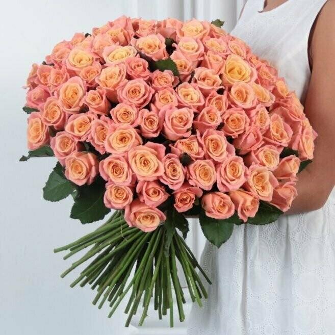 101 Роза (России) Мисс Пигги