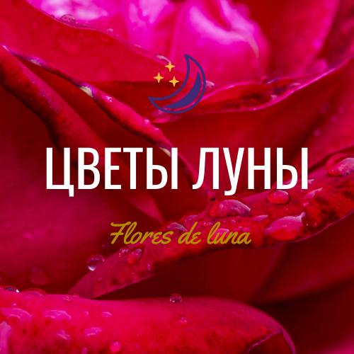 "Доставка цветов г.Саратов ""Цветы луны"""