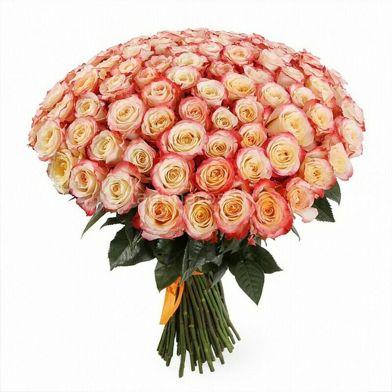 51 роза (Эквадор) Кабарет 60 см