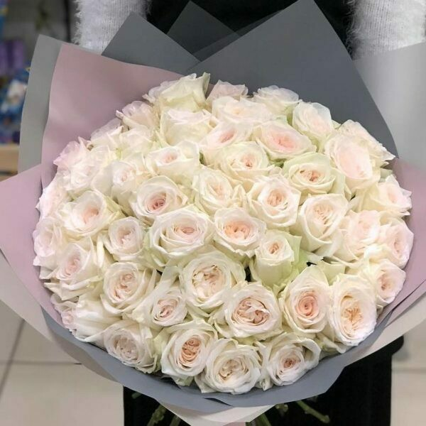 51 пионовидная роза (Эквадор) Вайт Охара