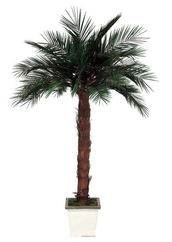 Пальма 300 см.