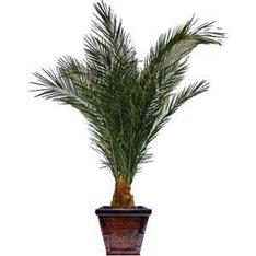 Пальма куст 100 см.