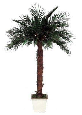Пальма 150 см.