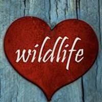 I Love Wildlife