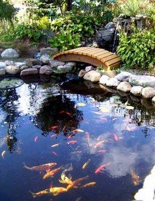 Superior Koi Pond Kit