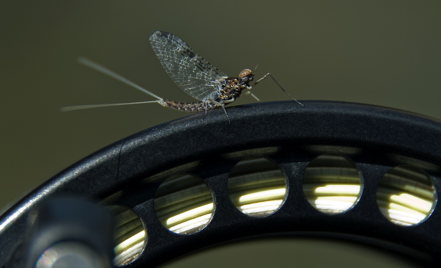 Photography on the Fly: Better Fly Fishing Photos