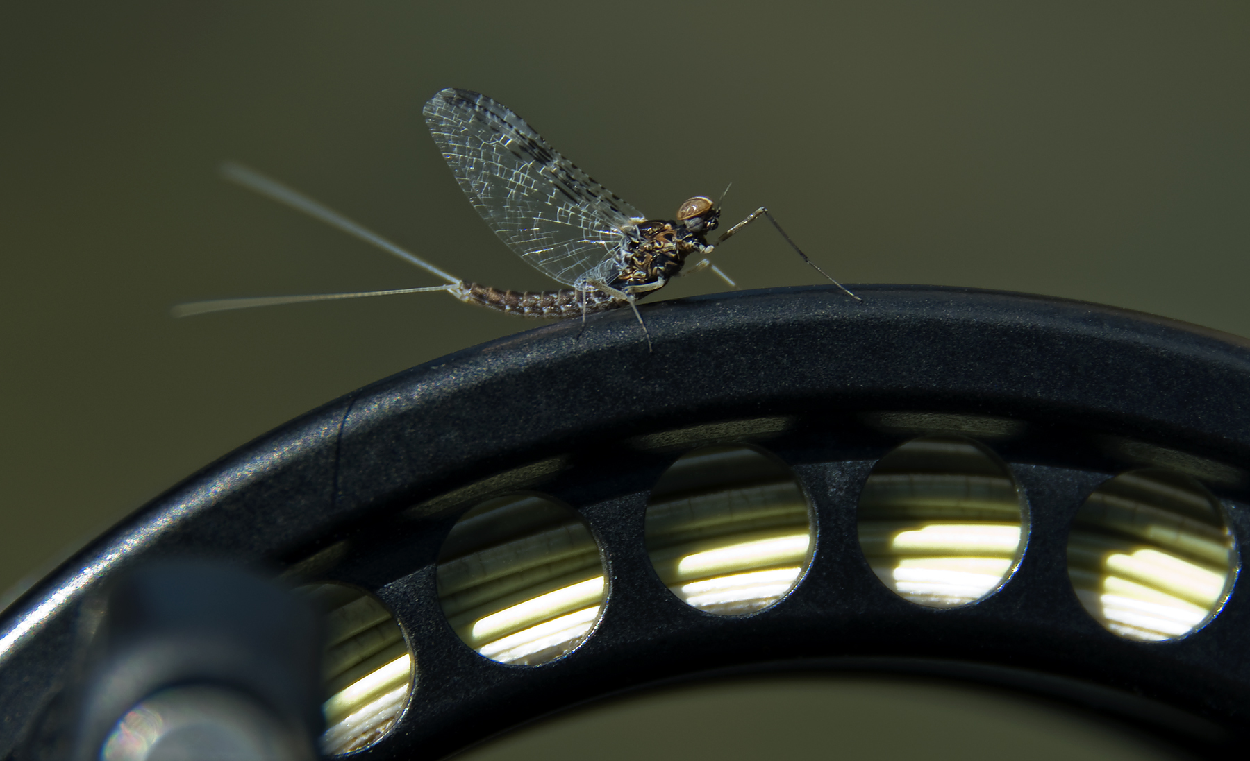 Photography on the Fly: Better Fly Fishing Photos 134