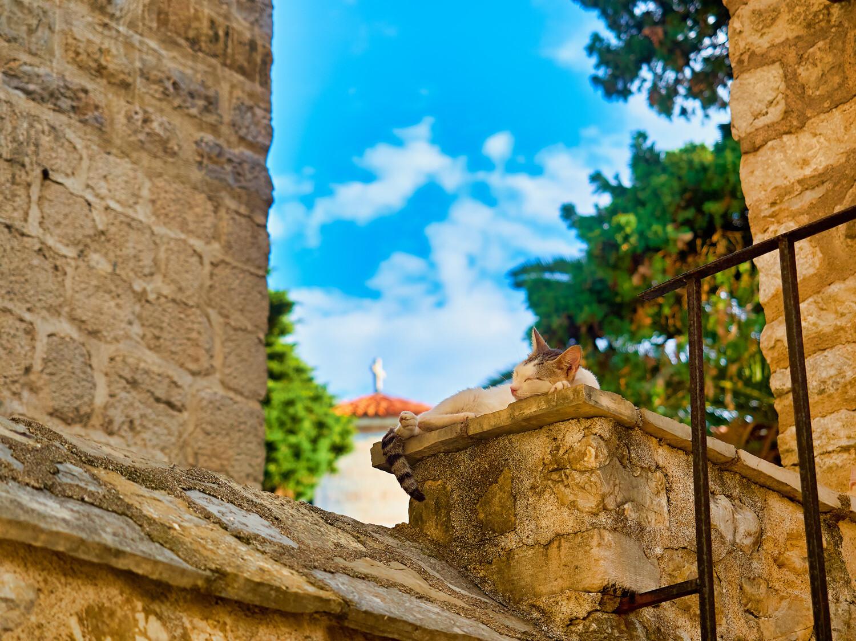 Kissa Montenegro 61x91 juliste