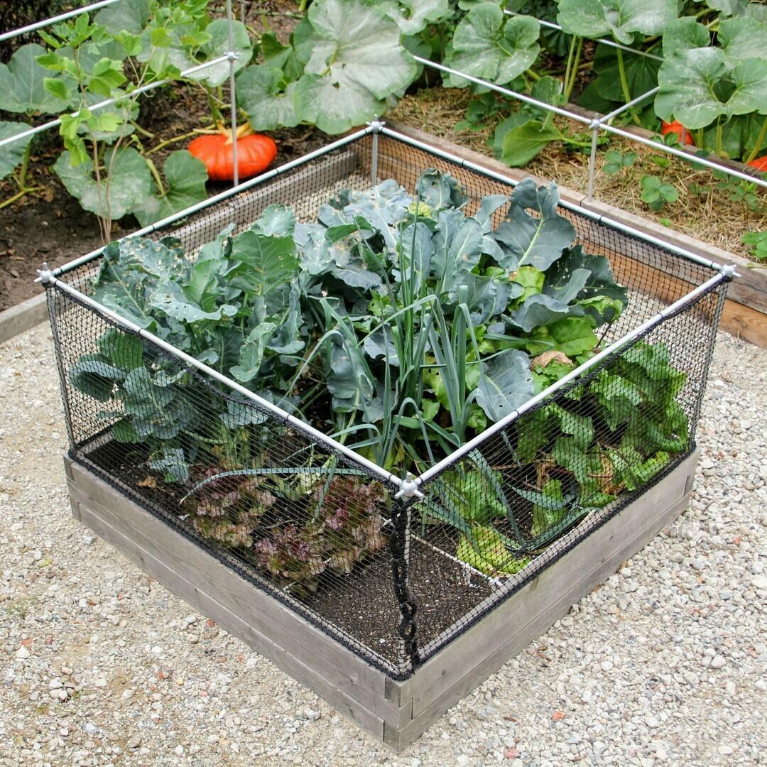 Fruit- en groentekooi op maat van je moestuinbak | B 107 cm