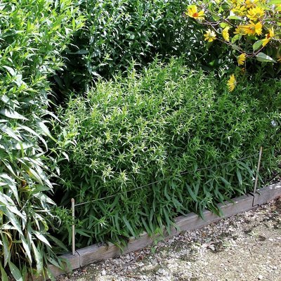 2 veelzijdige plantensteunen Smart 3-in-1 | L 100 cm