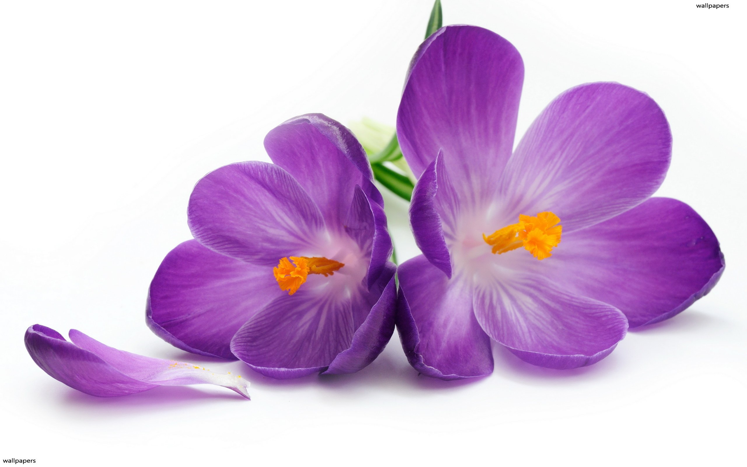 D'Olivo Violet Balsamic Vinegar 233
