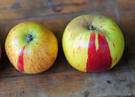 Gravenstein Apple White Balsamic Vinegar Gravenstein