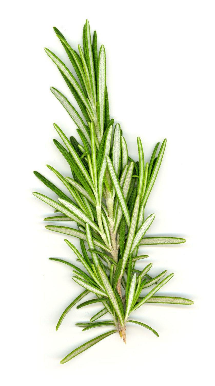 D'Olivo Wild Rosemary Olive Oil