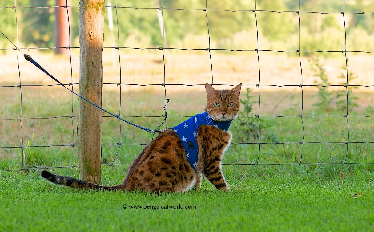 Butterfly Cat Jackets & Leash: Various Designs BCW16A
