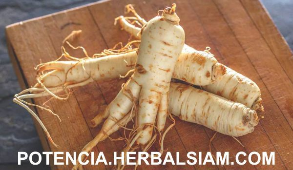 Chinese Ginseng 1kg.  3 y.old 01247