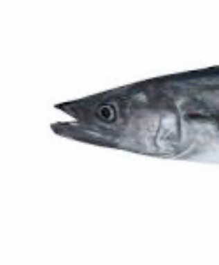 Spanish Mackerel quota per KG lease