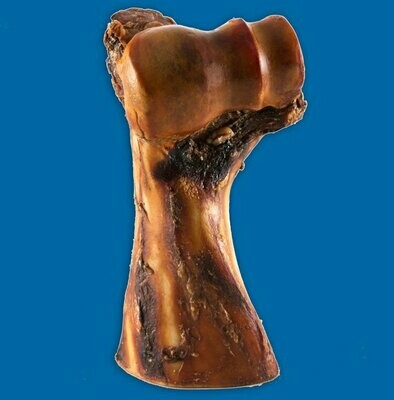 The Gavel Bone