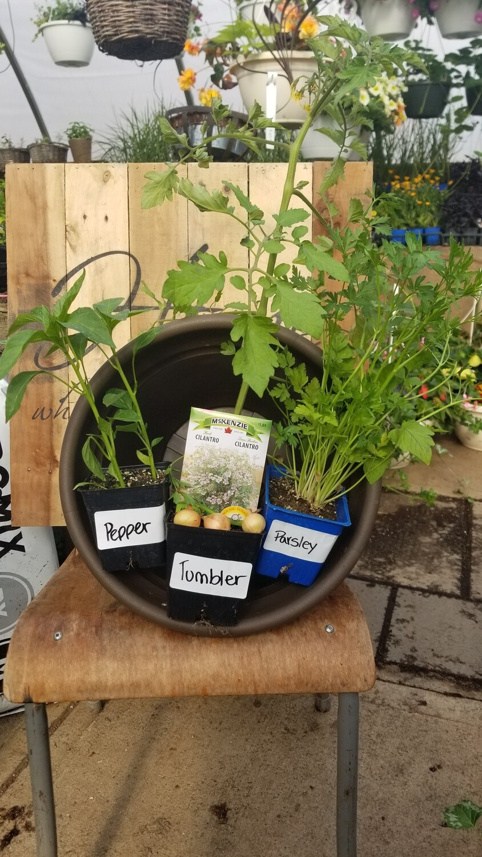 DIY Salsa Garden Kit