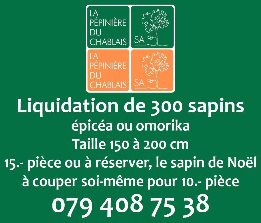 Sapins épicéa ou omorika 01438