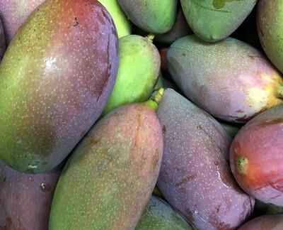 Mango Backyard /lb. LOCAL