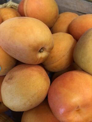 Apricots CA
