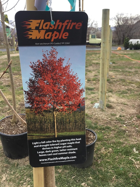Flashfire® Maple