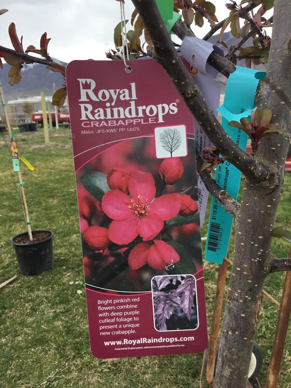 Royal Raindrops® Crabapple