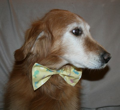 Dog Ties (Bow)