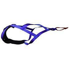 X1 Dog Harness