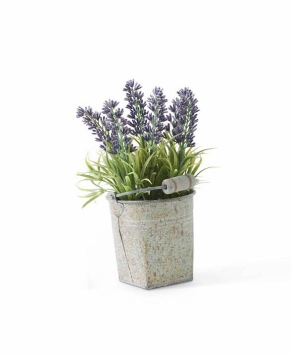 Lavender in tin bucket purple