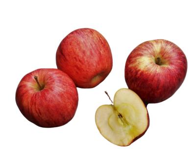 Apple Bag Varieties