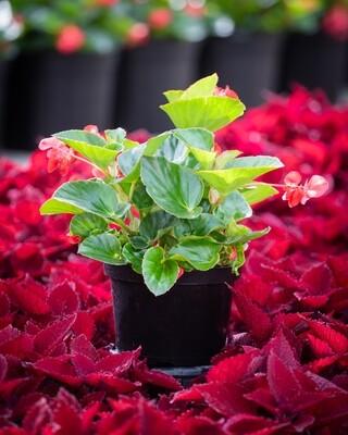 Target Field Plants - 8
