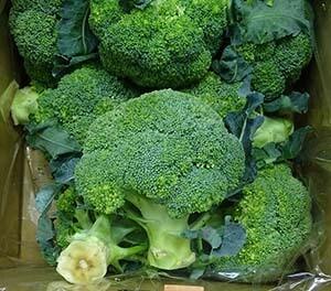 Diplomat Broccoli Plants