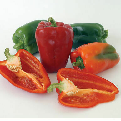 Sweet Red Pepper Plants (6 pack, small starts)