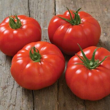 Marbonne Tomato Plant (one 4 inch pot)