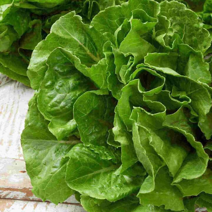 Lettuce Heirloom Buttercrunch