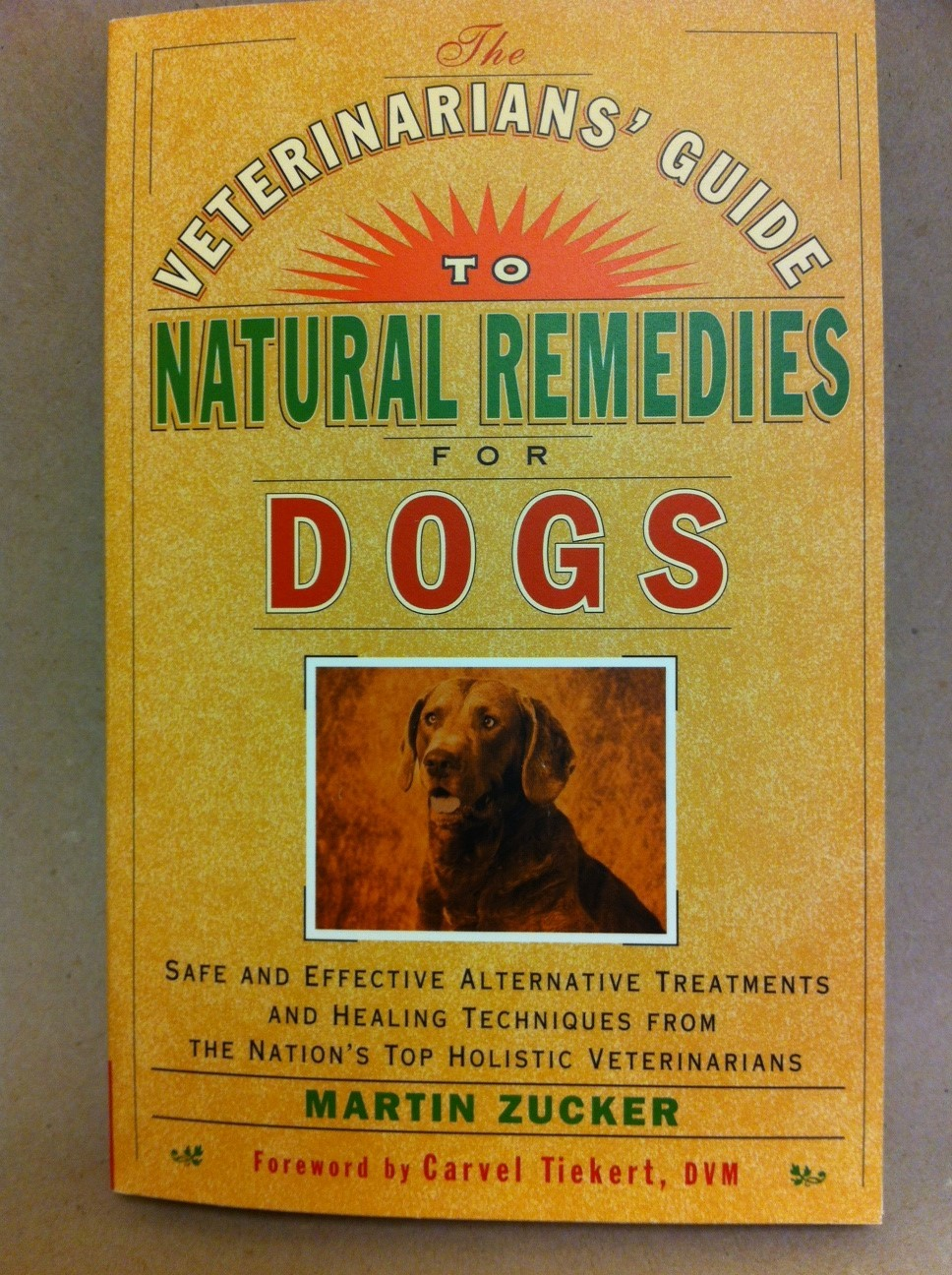 A Veterinarian's Guide to Natural Remedies for Dogs 1348
