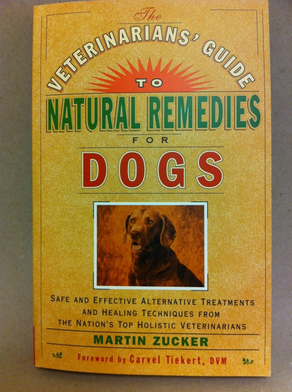 A Veterinarian's Guide to Natural Remedies for Dogs